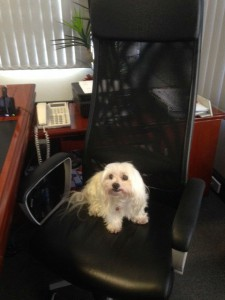 Snowy in Phil's Chair