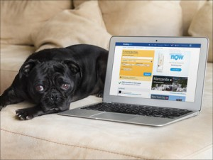 bookingcom-cute-dog-macbook-couch